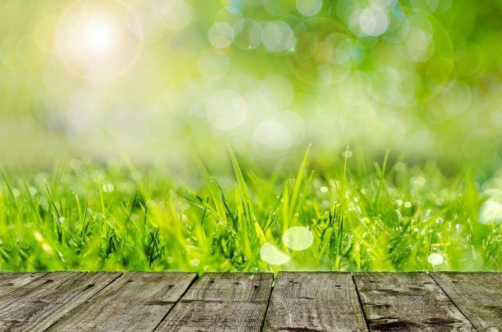 דשא ודק